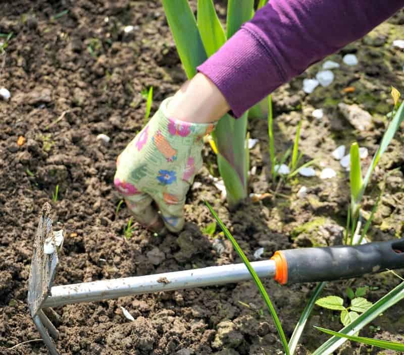 weeding-in-the-garden